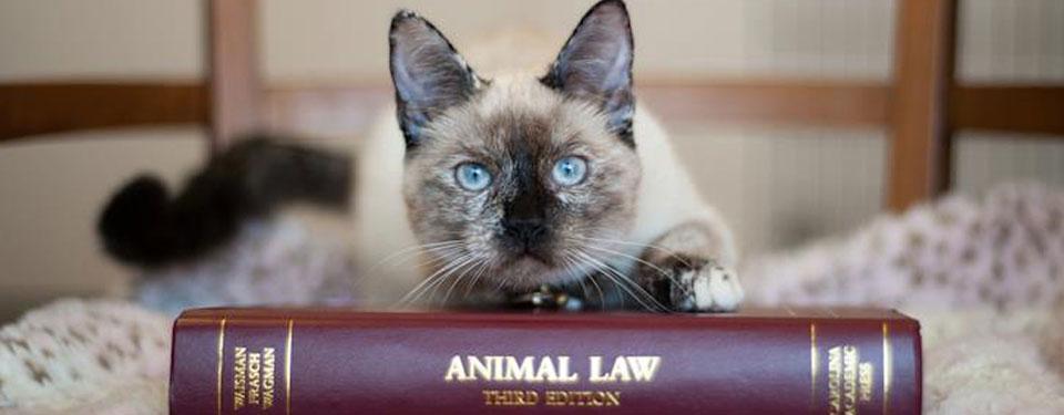 hayvanlari-koruma-kanunu