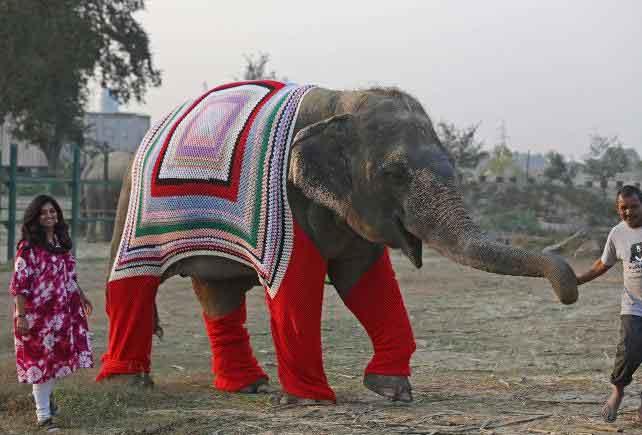 Hindistan'da köylüler fillere kıyafet örüyor