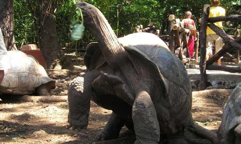 Dev Kaplumbağalar neden uzun yaşar?