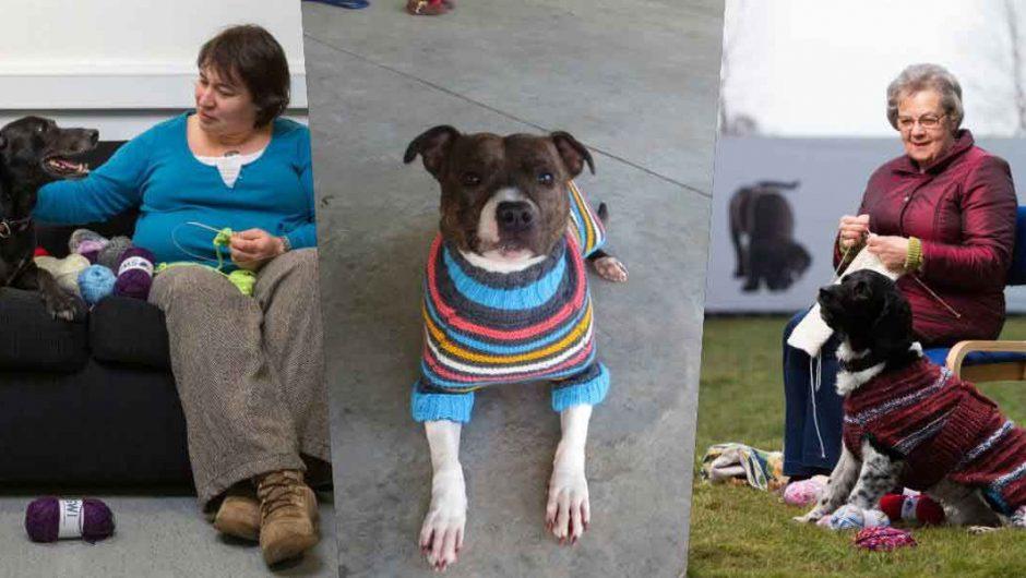 Koyu renkli oldukları için yuva bulamayan köpeklere rengarenk kazaklar örüyorlar