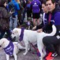 "Köpek Maratonu ""Perroton"""