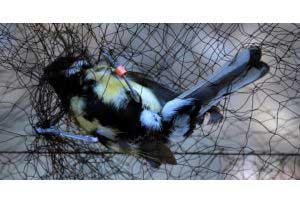 Türkiye'deki 5 Kuş Cinsinin 54 Farklı Türü Tespit Edildi