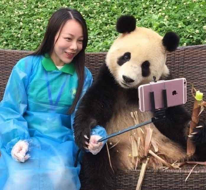 Çin'de Selfie Çeken Panda